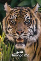 Watch Movie Inside Taronga zoo - Season 1