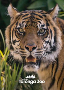 Watch Movie Inside Taronga zoo - Season 2