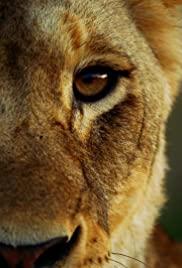 Watch Movie Malika the Lion Queen