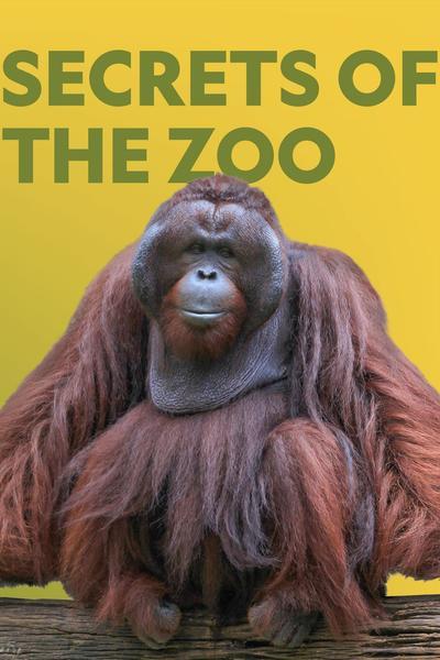 Watch Movie Secrets of the Zoo - Season 3
