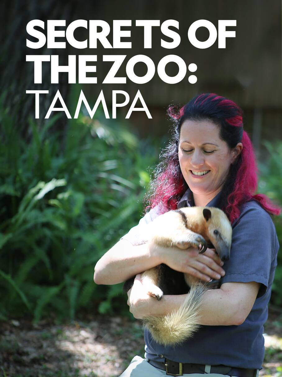 Watch Movie Secrets of the Zoo: Tampa - Season 2
