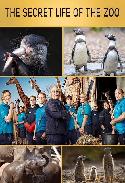 Watch Movie The Secret Life of the Zoo - Season 4