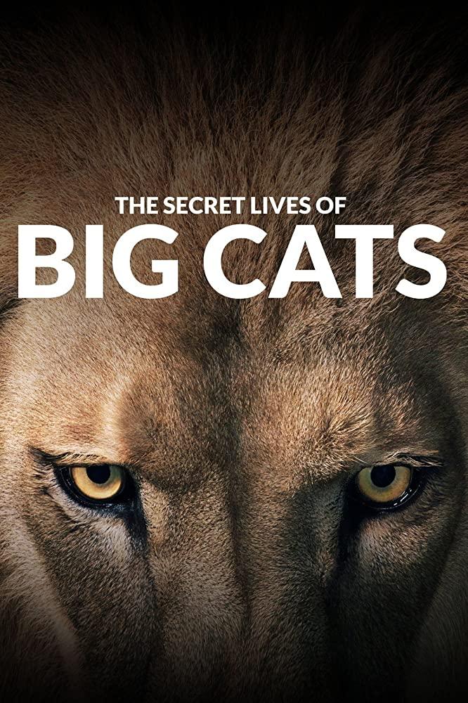 Watch Movie The Secret Lives Of Big Cats - Season 1