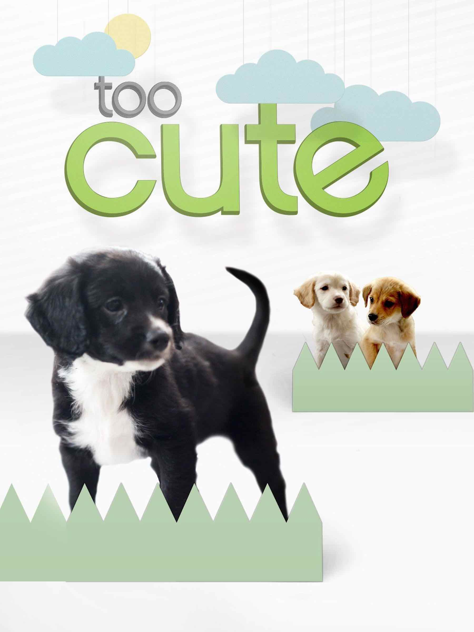 Watch Movie Too Cute! (All Season)