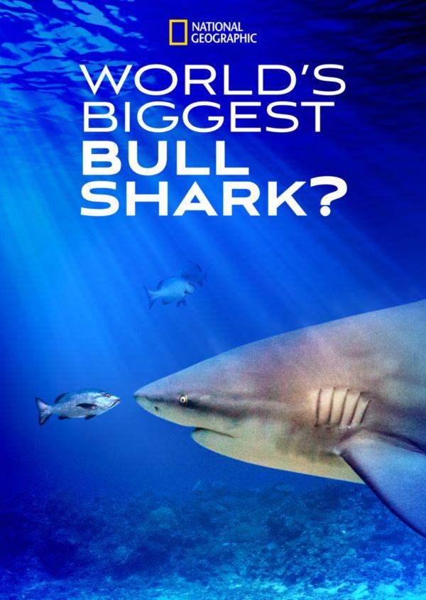 Watch Movie World's Biggest Bull Shark?
