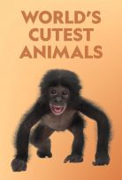 Watch Movie World's Cutest Animals - Season 1